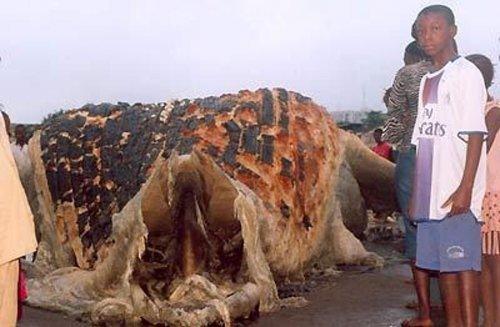 Глобстеры - неопознанные чудовища из морских глубин (23 фото)