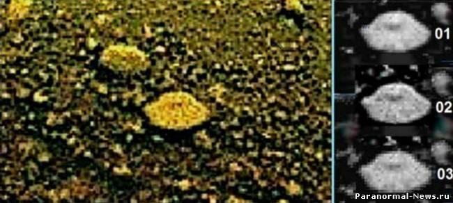 Каталог венерианской жизни (8 фото)