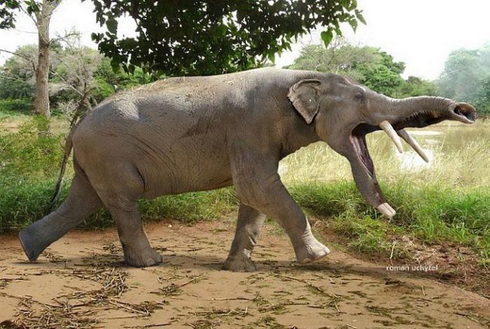 Платибелодон Доисторические животные древности, животные, мамонт