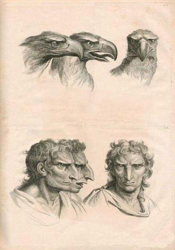 Варианты эволюции люди, эволюция