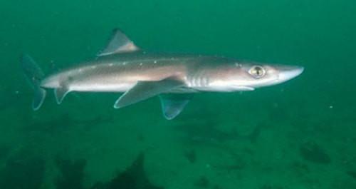 Опасные животные Черного моря (7 фото)