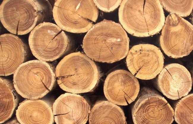 Китайские ученые создали искусственную древесину, которая не горит в огне (3 фото)