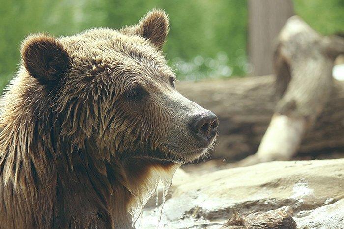 11. Что делать, если вы в лесу наткнулись на медведя выживание, жизнь, знание - сила, познавательно, полезные идеи, полезные советы, советы, хочу все знать
