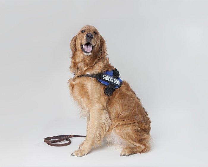 1. Что делать, если вы увидели служебную собаку без ее хозяина выживание, жизнь, знание - сила, познавательно, полезные идеи, полезные советы, советы, хочу все знать