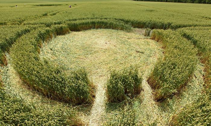 Загадочные круги на полях 45-й параллели (8 фото)