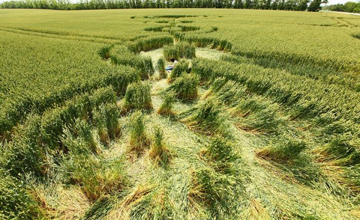 Загадочные круги на полях 45-й параллели