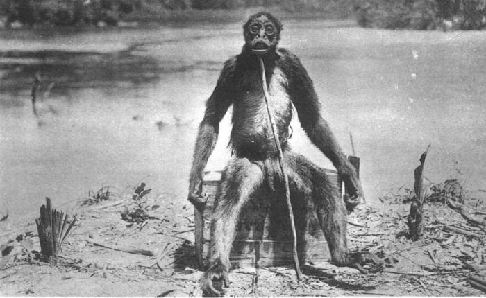 Обезьяна де Луа Гигантская обезьяна якобы столкнулись с швейцарским исследователем Франсуа де Луа в 1920 году, недалеко от реки Тарра в Колумбии. Фотография зверя была опубликована в 1929 изданием Illustrated London News — несмотря на то, что подавляющее большинство экспертов прямо назвали ее мистификацией.