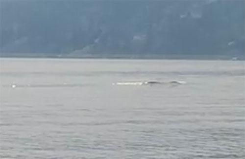 В Канаде сделали лучший снимок монстра Огопого, живущего в озере Оканаган (4 фото)