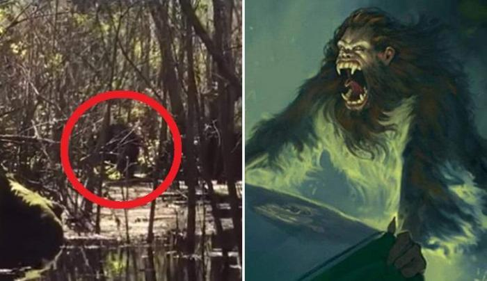 Легендарную скунсовую обезьяну засняли на болотах Флориды