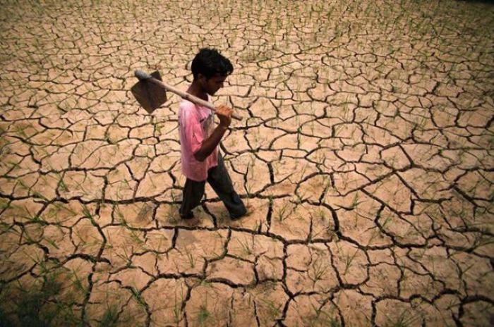 Засуха на рисовом поле в Индии, вызванная прошлым Эль-Ниньо.