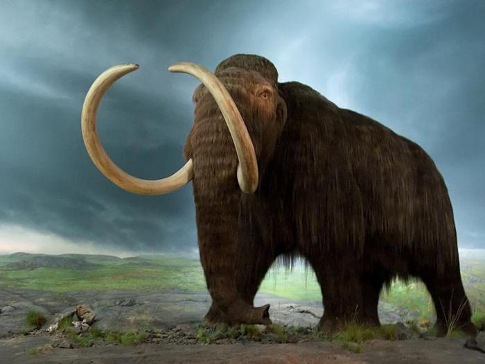 Вымершие животные вернулись к жизни