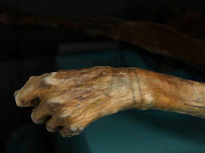 Поэтому ученых удивили обе найденные мумии: логичнее было бы обнаружить тела со следами татуировки в других культурах. Возраст мумии народа Чинчорро проверили с помощью повторного радиоуглеродного анализа. Результат подтвердил догадки Ларса: мумия из Южной Америки на целых 500 лет моложе Эци.