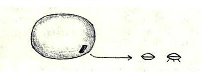 Носитель яйцевидной формы из системы α Тельца (Альдебаран). Малые модули линзовидные, с тремя опорами