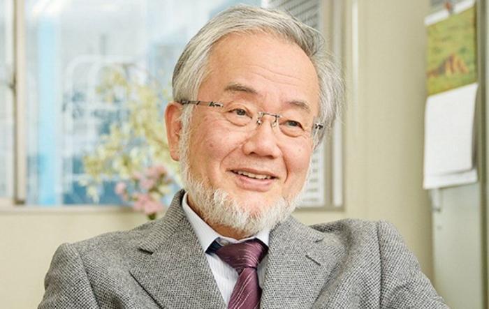 Нобелевская премия за открытие аутофагии