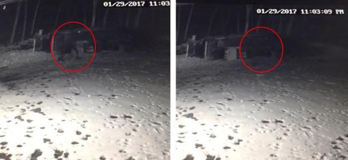 Собака лаяла на кого-то, ее хозяин установил камеру и заснял странное существо (2 фото + видео)