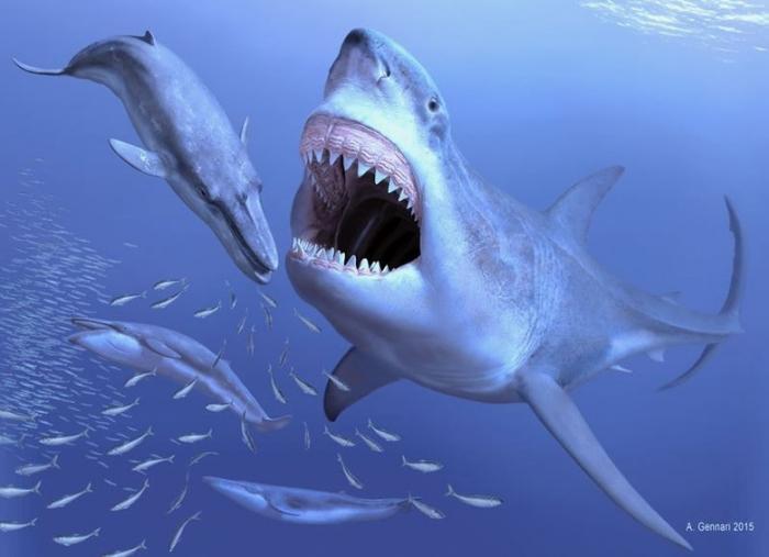 Гигантская акула мегалодон сеяла ужас в мировом океане (6 фото)