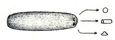 Весьма распространённая форма носителей — «сигара», длина от 100 м до 5 км, Ø от 20 до 500 м. Малые модули у них самые разнообразные