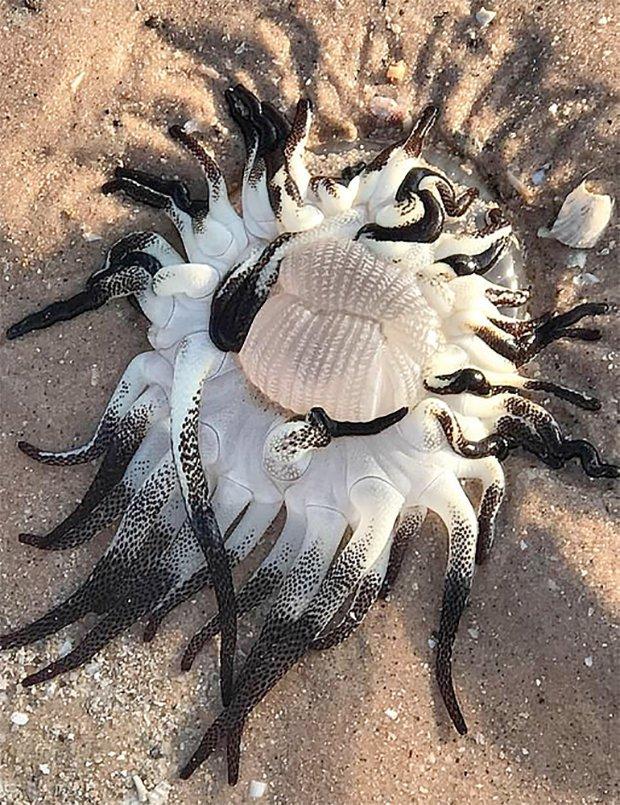 Неопознанное морское существо выбросило на берег в Австралии