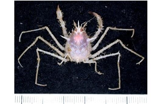Более сотни неизвестных науке морских существ нашли у берегов Австралии (8 фото)