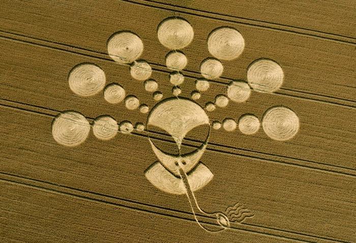 Гуманоидные круги на полях: расшифровка, что нам хотят сказать (13 фото)
