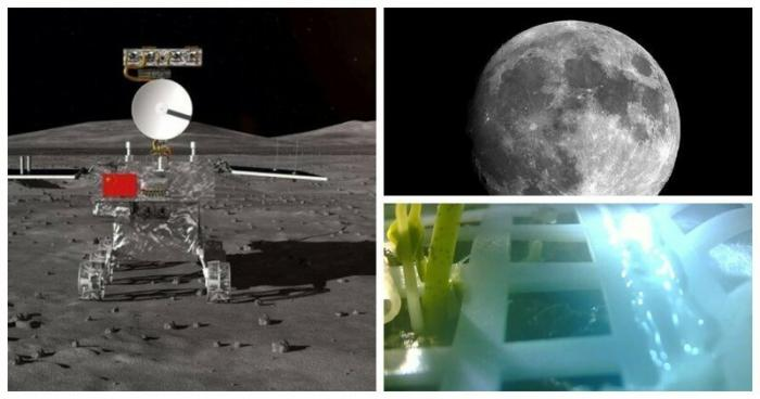 Китайцы вырастили на Луне хлопок и показали его фотографии ynews, Чанъэ-4, космос, луна, мироздание, проростки хлопка, хлопок, эксперимент
