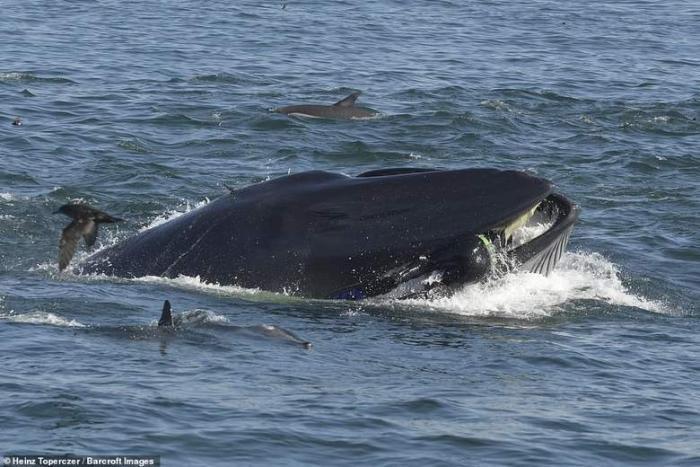 Южноафриканский дайвер попал в пасть кита (6 фото)
