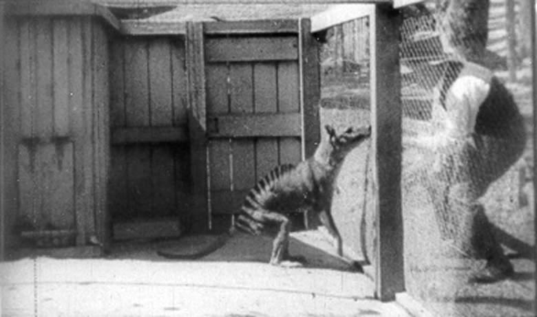 Новая и необычная теория о том, кто такая чупакабра (4 фото)