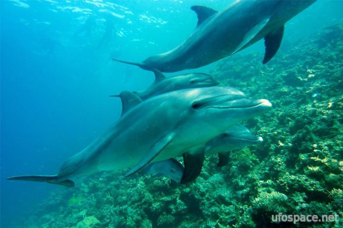 Загадочные случаи, когда дельфины спасали людей от акул (3 фото + видео)