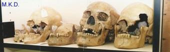 Легенды о Саидуках - рыжеволосых людоедов-гигантов (12 фото + видео)