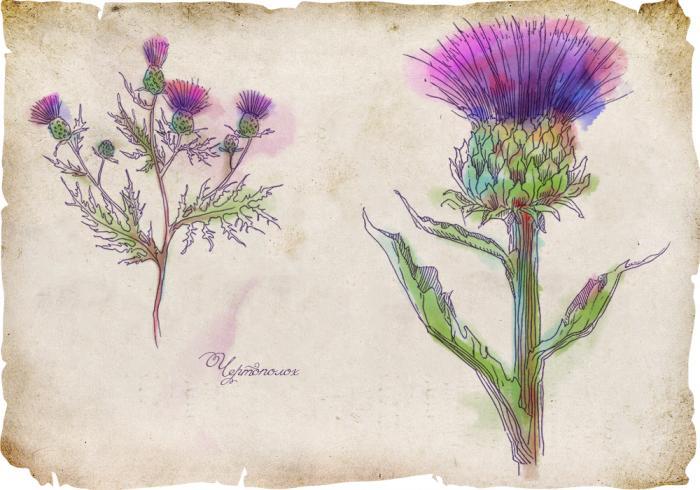История магических трав славян с древнейших времен (8 фото)