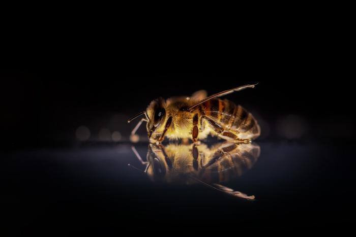 Пророчество Ванги о пчелах начало сбываться? (3 фото)