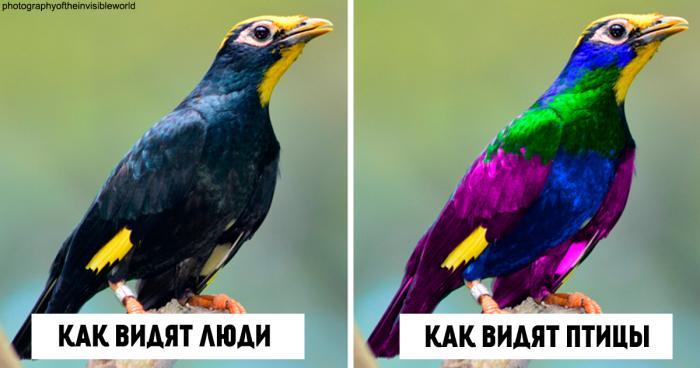 Вот как птицы видят мир по сравнению с людьми (7 фото)