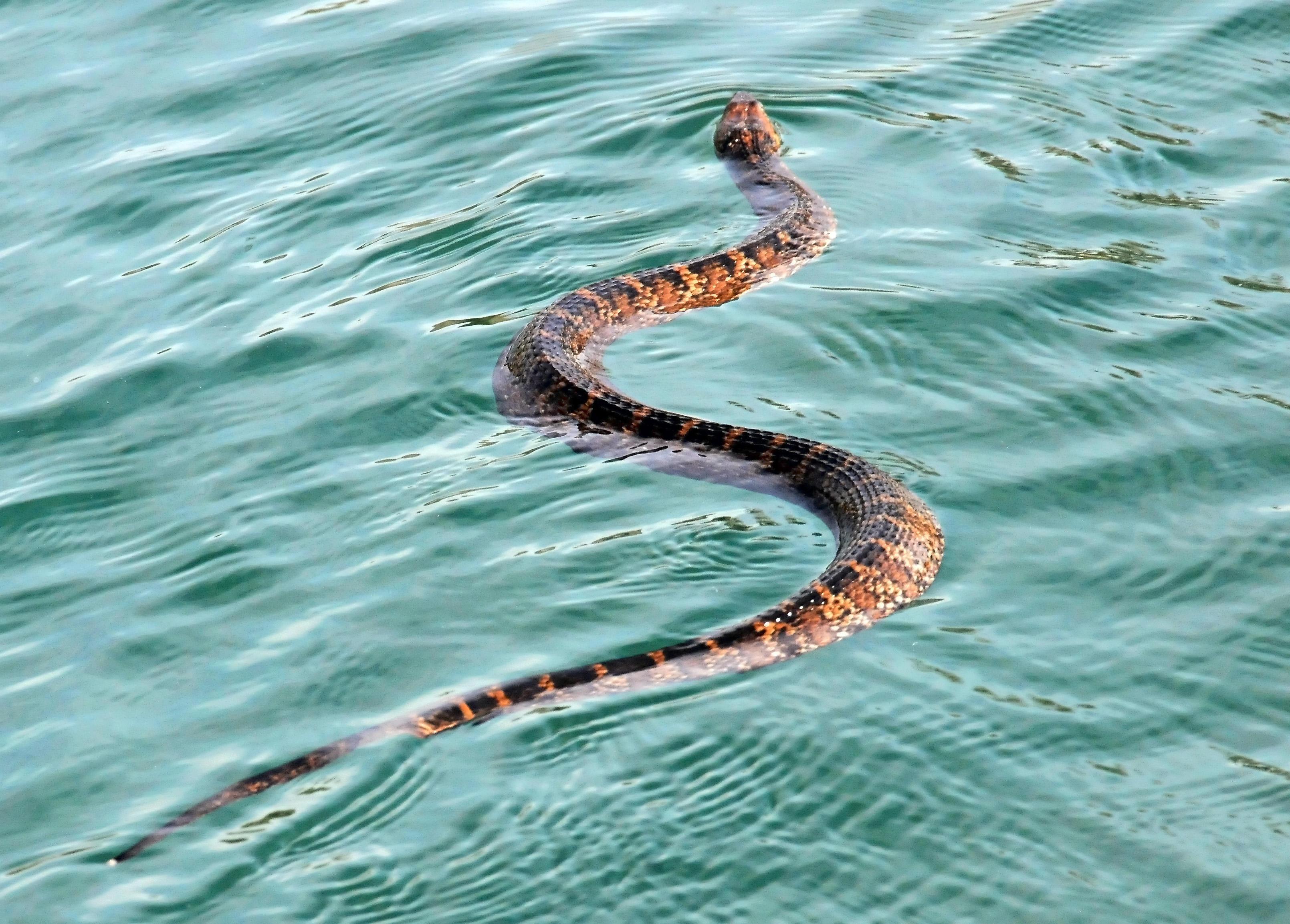 меня какие змеи обитают на мальдивах фото номеров имеет