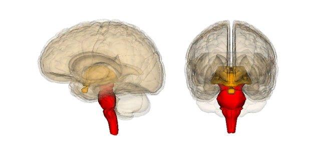 Сознание может существовать отдельно от мозга или быть побочным эффектом формирования Вселенной