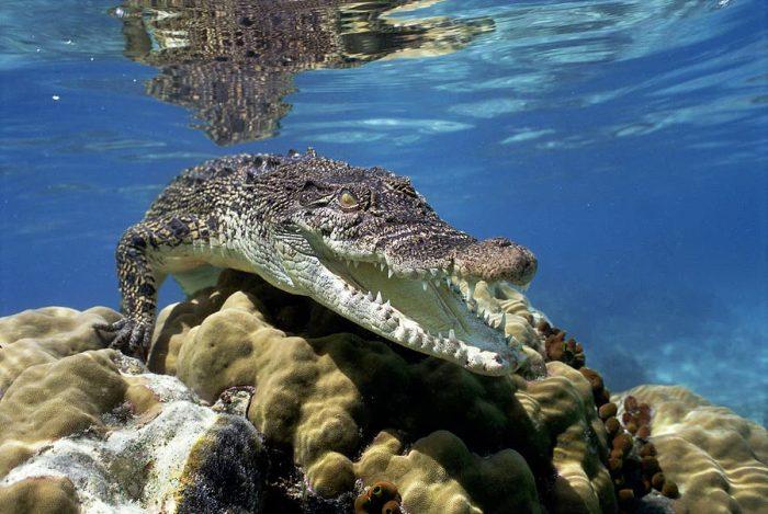 14 очень опасных существ на планете