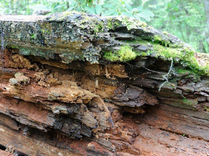 Почему раньше деревья каменели, а не сгнивали?