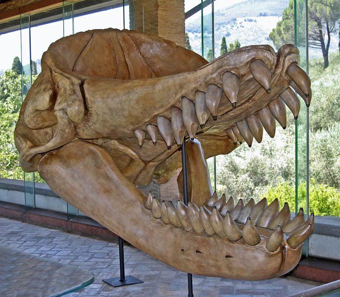 Все об акуле Мегалодон, сколько дайверов может съесть