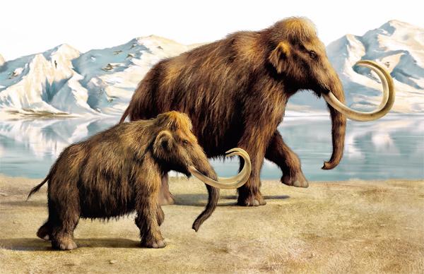Непознанное в животном мире живут ли мамонты в Сибири