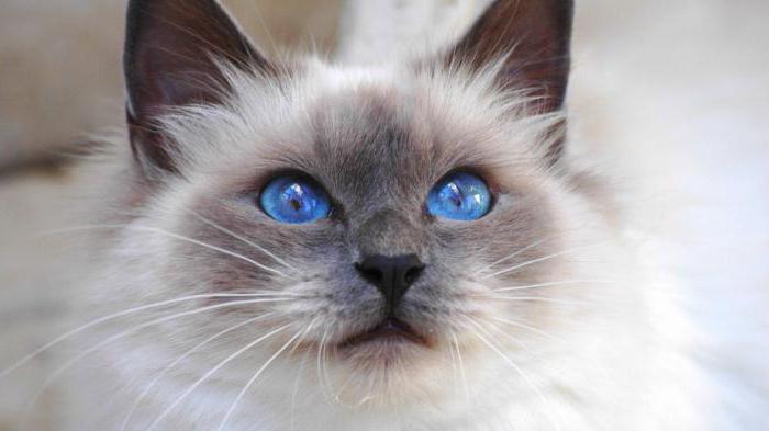 Во сне убил кошку: к чему это? Пытаться убить кошку во сне: что это значит?