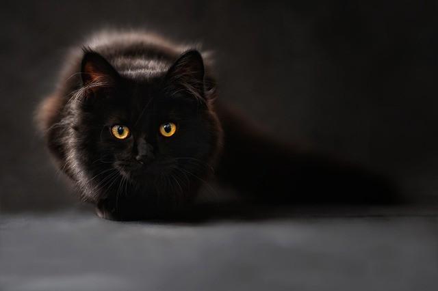 Убивать кошку во сне - что сулит сон, узнаем из сонников