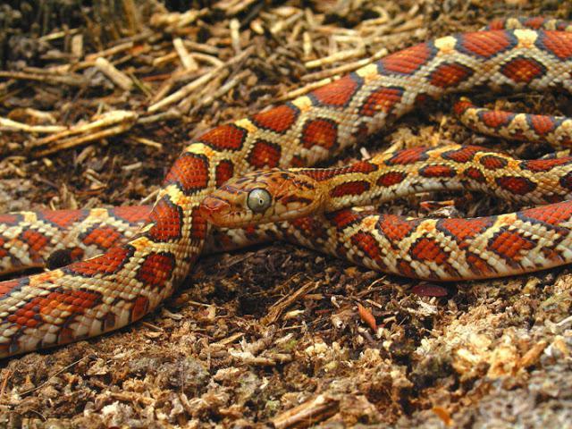 К чему снится змея мужчине? Значение и толкование сновидения