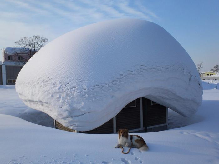 Сонник белый снег выпал