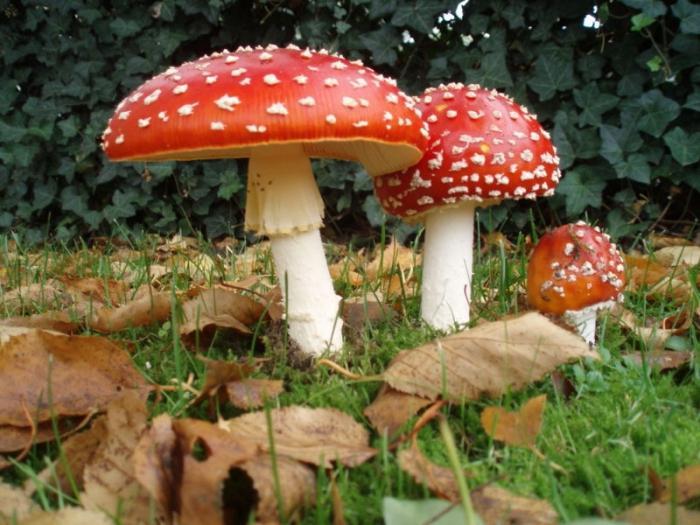 Сонник миллера грибы видеть во сне