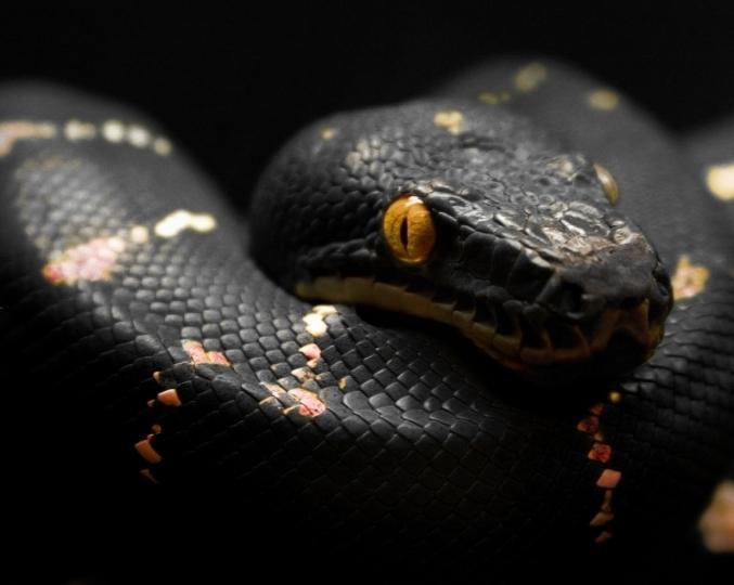 Чего ожидать, если во сне увидел змею?