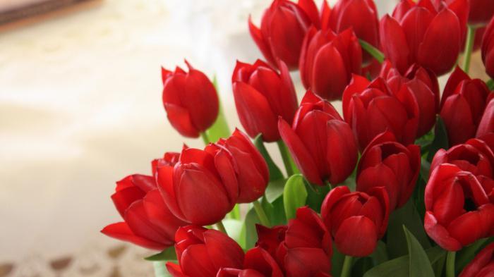 К чему снятся тюльпаны красные - К чему снятся тюльпаны желтые