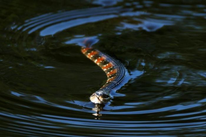 Змея – символ древний, у него огромное множество значений, и такой сон – без сомнений, очень значимый.