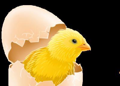 Сонник: к чему снится разбить яйцо? К чему снятся разбитые яйца?