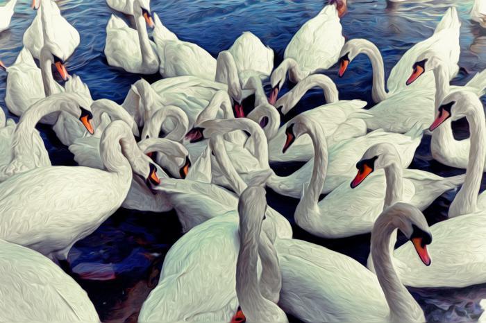 сонник лебеди белые в небе