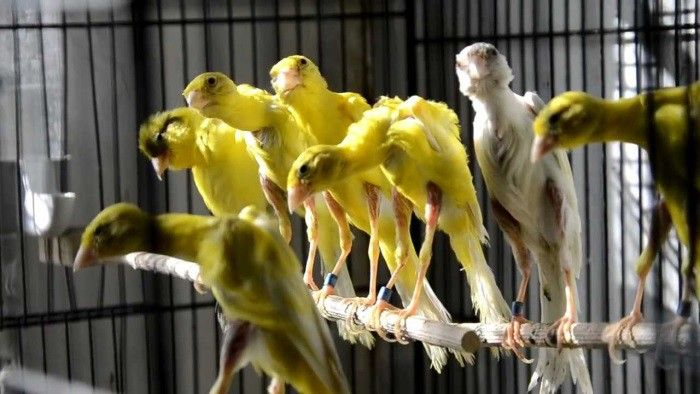 Ужасы генной инженерии: 7 самых страшных пород домашних животных (7 фото)