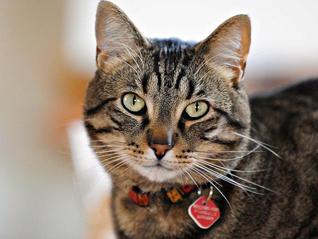 Мужчина кошка женщина кот